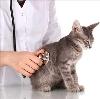 Ветеринарные клиники в Ребрихе
